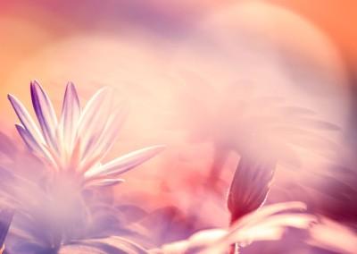 garden_party_flowers-1080